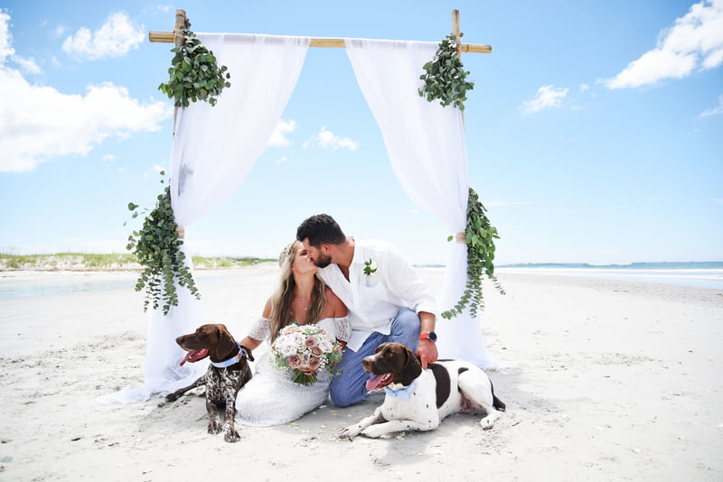 island wedding with dogs